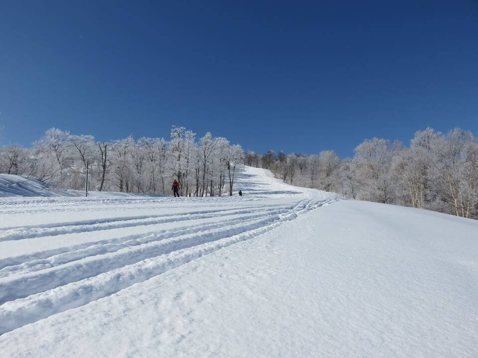 Fresh Lines being drwonb early this morning in Nozawa. Photo by Nozawa Onsen Snow Resort
