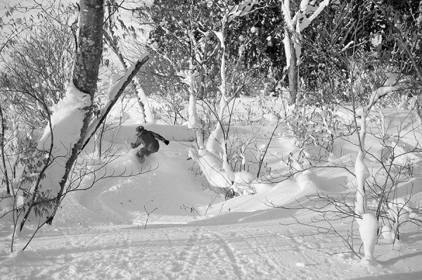 A boarder riders with confidence through the lower early season trees of Nozawa Onsen.
