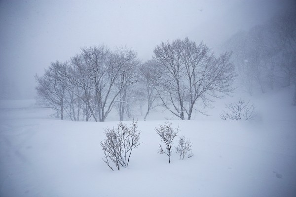 Ghostly trees somewhere in Nozawa.