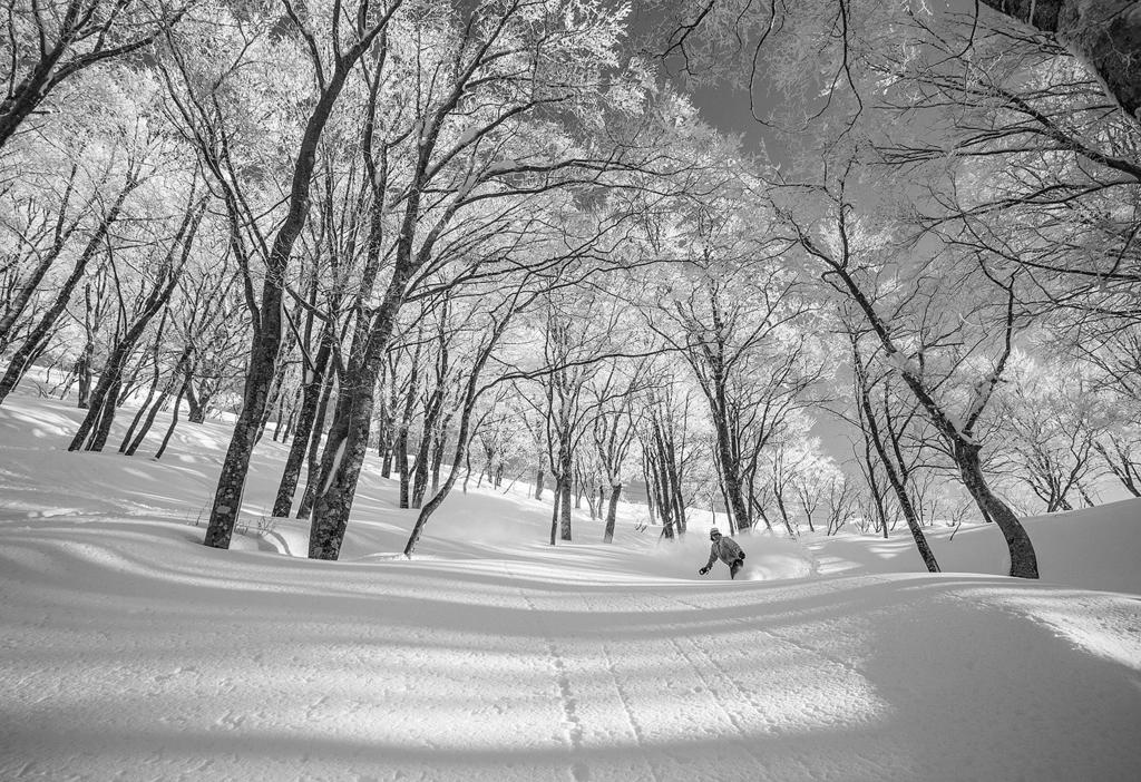 Classic tree skiing in Nozawa Onsen.
