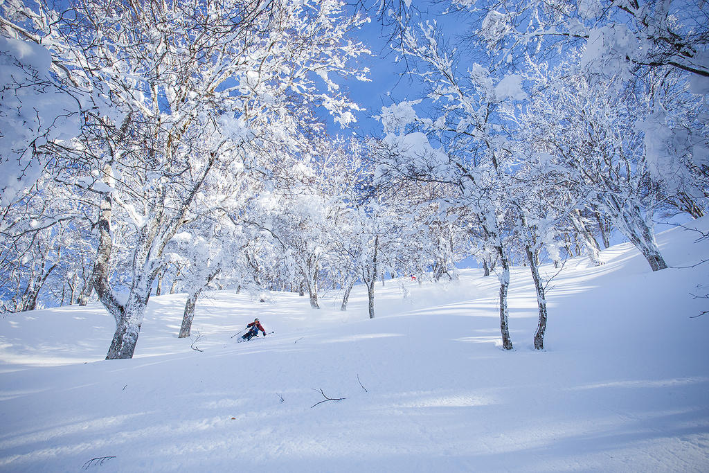 Jerry skis in the trees at the upper area of Nozawa Onsen.