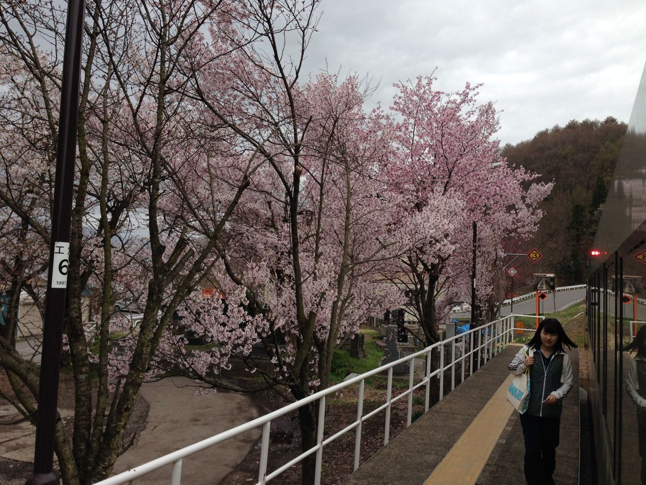 Cruising thru the country side of Iiyama on the local train opens up lots of magic views of the Cherry Blossoms