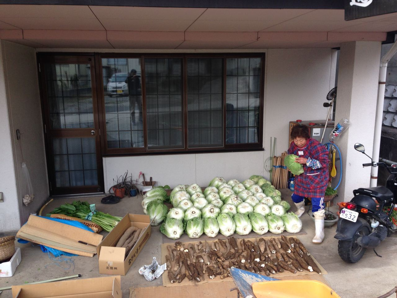 Our neighbour Kazuko san working hard to get the crop in before the snow arrives in Nozawa