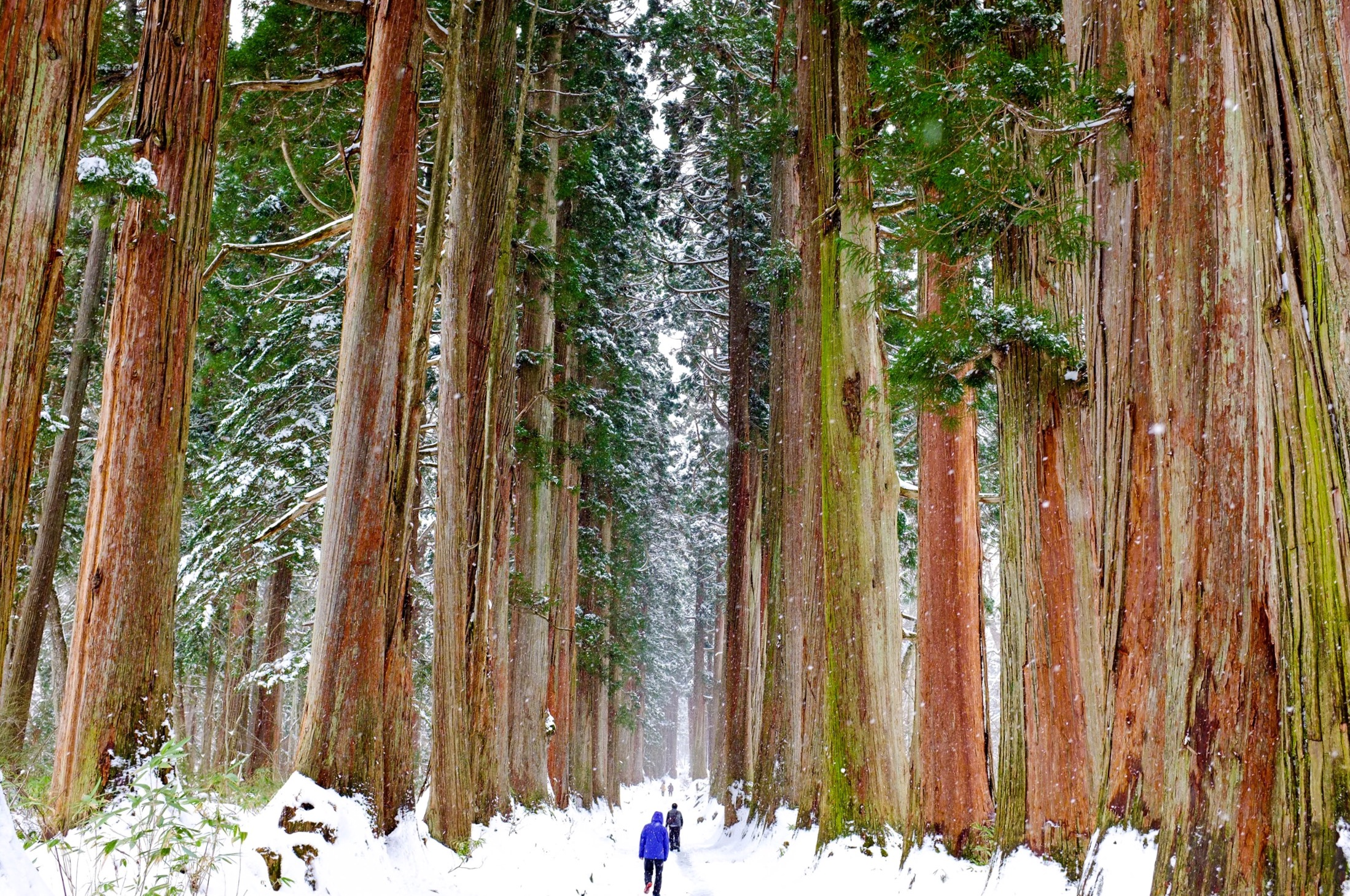 The huge Cedar trees not far from Nozawa make you appreciate the power of Nature