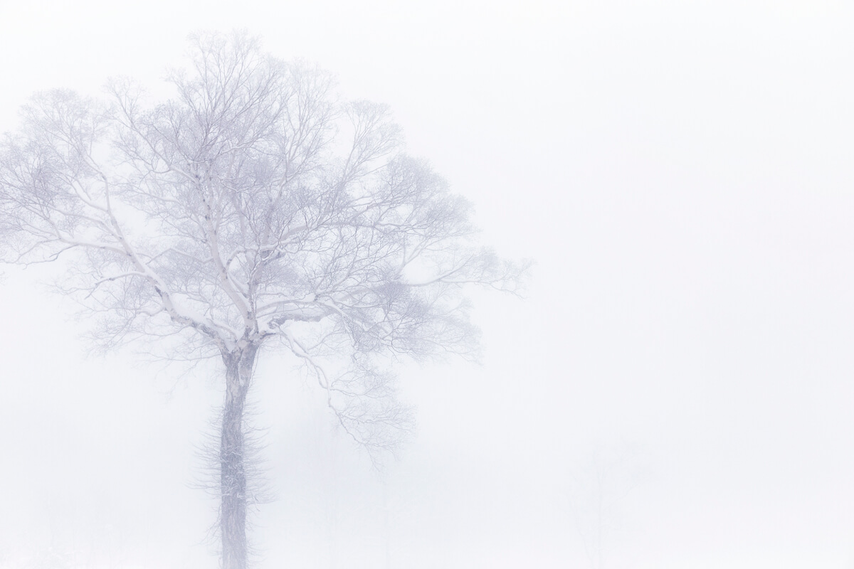 Tree in fog, Yamabiko.