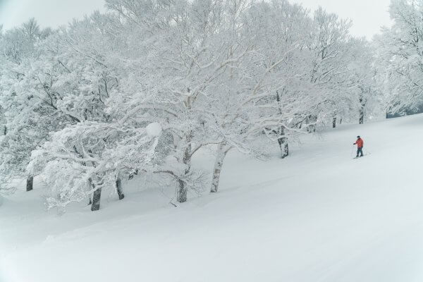 Nozawa Snow Report Thursday 22nd of February 2018