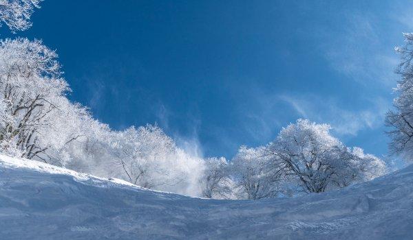 Nozawa Snow Report Sunday 25th of February 2018